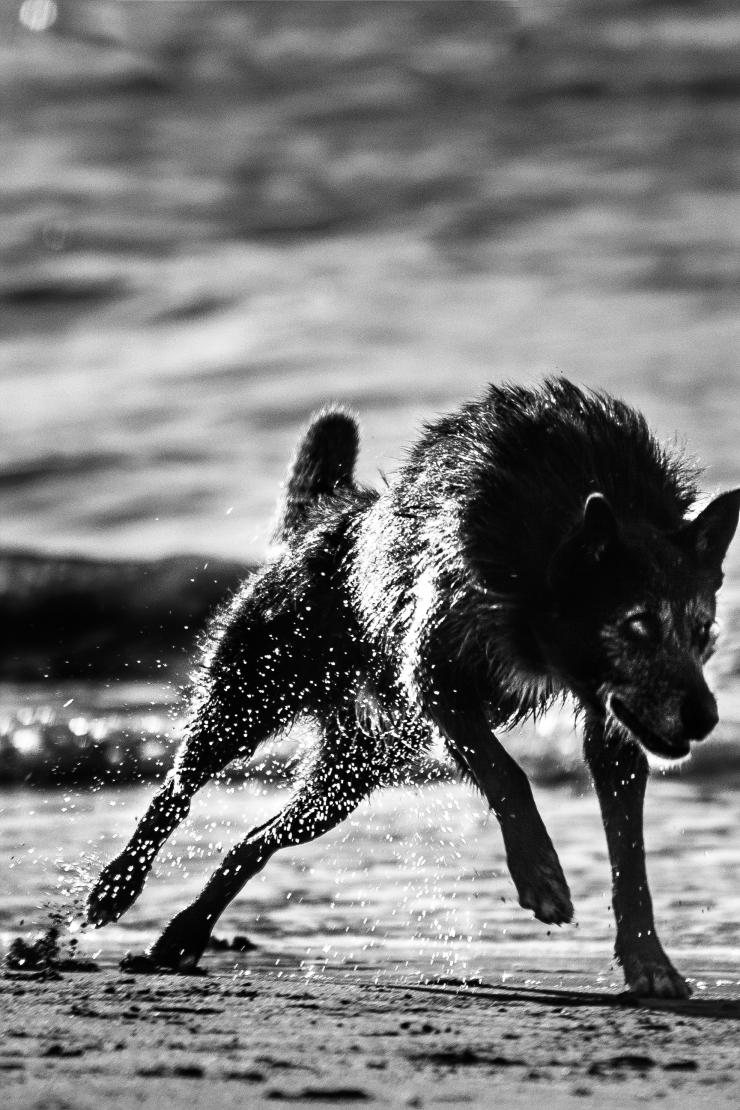 el perro de Varese
